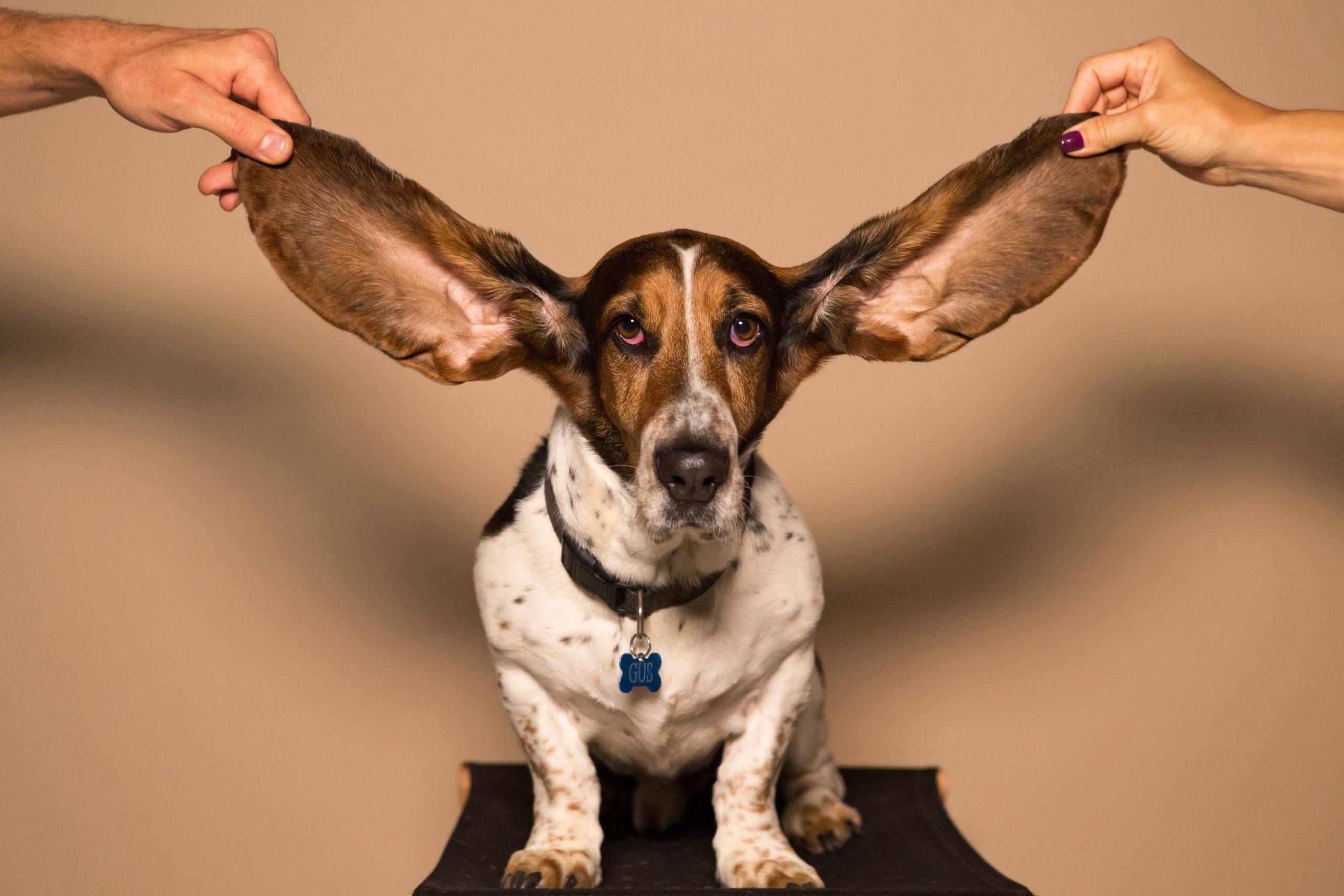 האם אני מצליחה להקשיב לעצמי בתוך סערת רעשי הרקע?